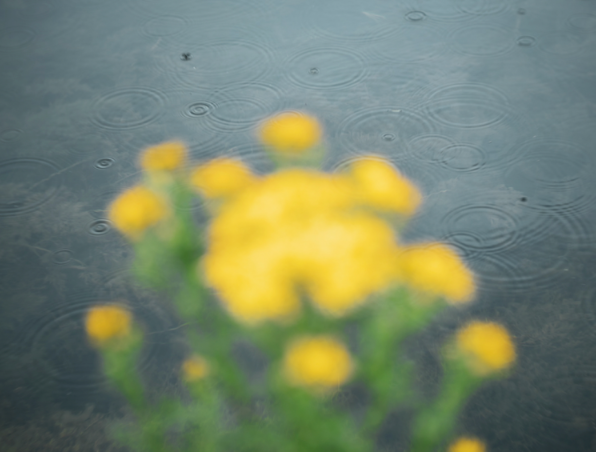 waterways-ireland-culture-night-2020